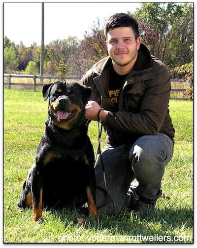 Rottweiler Breeders In Missouri