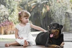 Rottweilers Life Expectancy