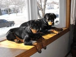 Dogs On The Window